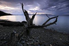 死海结构树 免版税库存照片