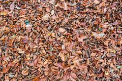 死的叶子背景 免版税库存图片