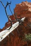 死的木头倾斜反对红色岩石 库存照片