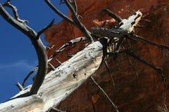 死的木头倾斜反对红色岩石 免版税库存照片