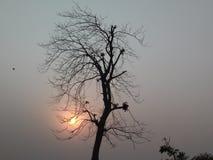 死的树和落日 库存照片
