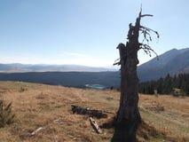 死的树和黑湖在距离 免版税库存照片