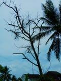 死的树在庭院里 库存照片