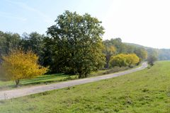 死的树在早期的秋天的草甸 免版税库存图片