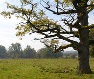 死的树在早期的秋天的草甸 库存图片