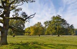 死的树在早期的秋天的草甸 库存照片