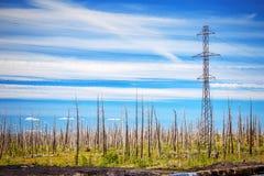 死的树在Norilsk附近的森林里 免版税库存照片