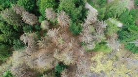 死的树鸟瞰图-森林dieback - Waldsterben,德国 股票视频