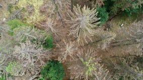 死的树鸟瞰图-森林dieback - Waldsterben,德国 股票录像