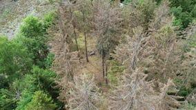 死的树鸟瞰图-森林dieback - Waldsterben,德国 影视素材
