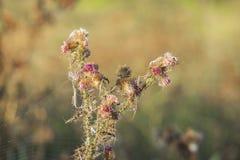 死的植被特写镜头由于气候变化天旱 免版税库存照片