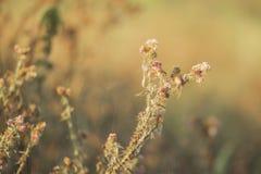 死的植被特写镜头由于气候变化天旱 库存图片