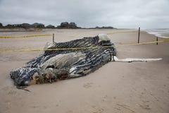 死的母驼背鲸包括尾巴和在火海岛,长岛,海滩上的背鳍,与沙子在前景和议院我 免版税库存图片