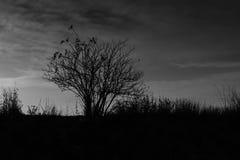 死的灌木 库存图片