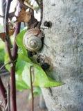 死的蜗牛 免版税库存图片