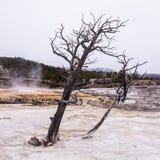 死者被烘干在硫磺水池的树  库存图片