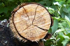 残余部分结构树 免版税库存照片