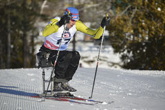 残奥会坐滑雪竟赛者 免版税库存照片