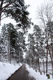 残暴的人河在冬天 免版税库存照片