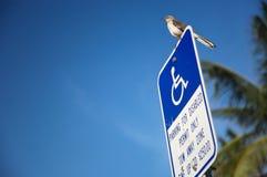 残疾批次停车符号 图库摄影