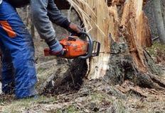 残破的剪切结构树伐木工人 免版税库存图片