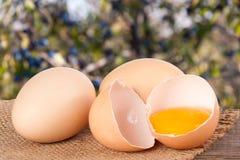残破的在一张木桌上的鸡蛋用卵黄质和蛋壳有模糊的庭院背景 免版税库存图片