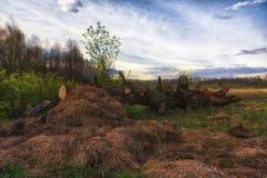 残破的干草堆下落的橡树 库存照片
