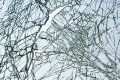 残破的挡风玻璃 免版税库存照片