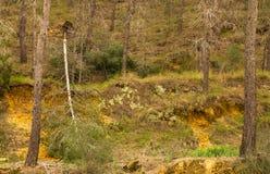 残破的树森林 免版税库存图片