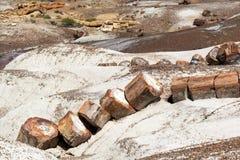 残破的森林国家公园石化结构树 免版税库存图片