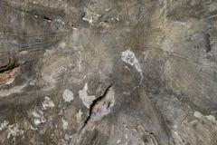 残破的破裂的深灰水泥表面纹理 图库摄影