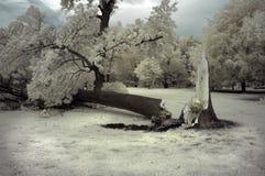 残破的结构树 库存图片