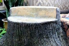 残破的结构树 免版税库存图片