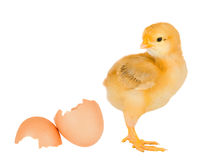 残破的鸡蛋壳黄色 库存照片