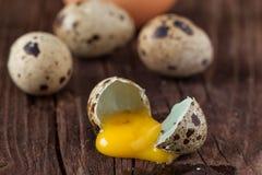 残破的鹌鹑蛋用泄漏的卵黄质 免版税图库摄影