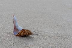 残破的壳坐湿沙子 库存照片