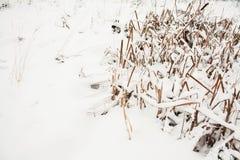 残破的多雪的冬天薹 免版税库存图片