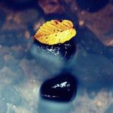 残破的山毛榉叶子 有低级的山河水,与叶子的石渣 免版税库存图片