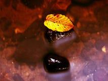 残破的山毛榉叶子 有低级的山河水,与叶子的石渣 图库摄影