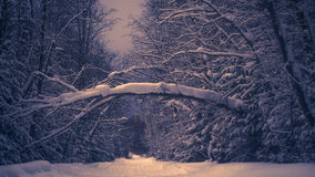 残破的树在冬天期间,森林道路 免版税库存照片