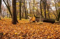 残破的树在秋天公园 免版税库存图片