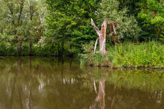 残破的树干在小河的水表面反射了 免版税库存图片
