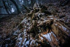 残破的树干 免版税图库摄影