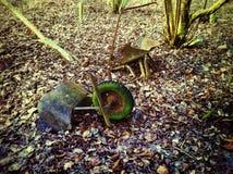 残破的独轮车 库存照片