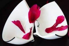 残破的白色杯子和红色粉碎了花瓣 免版税库存照片