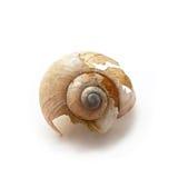 残破的蜗牛巧克力精炼机 免版税图库摄影
