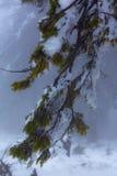 残破的结构树 库存照片