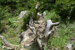 残破的结构树 免版税图库摄影