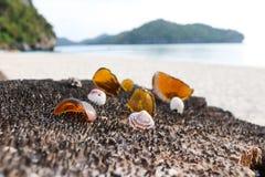 残破的玻璃和壳在海滩 免版税图库摄影