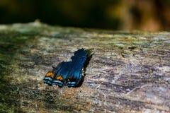 残破的蝴蝶翼坐日志 免版税库存照片